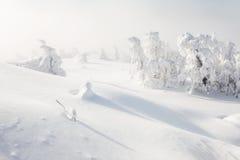 包括的森林雪结构树 库存照片