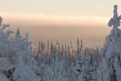 包括的森林雪 免版税库存图片