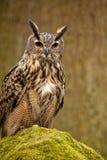 包括的老鹰青苔猫头鹰岩石 库存照片
