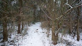 包括的路径雪 库存图片