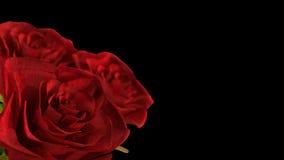 包括的转动的红色玫瑰阿尔法通道- 3D回报 库存例证