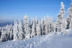 包括的雪云杉 库存图片