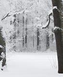 包括的雪木头 库存图片