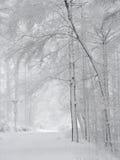 包括的雪森林 免版税库存照片