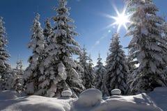 包括的雪结构树 免版税库存图片