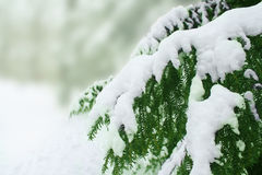 包括的雪结构树 库存照片