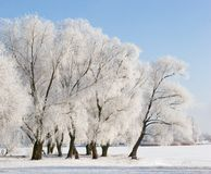 包括的雪结构树 免版税图库摄影