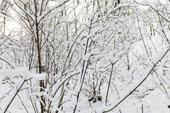 包括的雪结构树 免版税库存照片