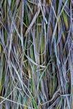 包括的霜草灰白叶子薄菏 图库摄影