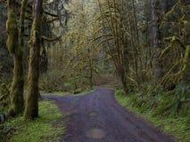 包括的青苔俄勒冈结构树 免版税图库摄影