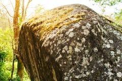 包括的青苔石头 美丽的青苔和地衣盖了石头 Bri 免版税库存图片