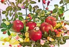 ?? 包括苹果和叶子的秋天构成 库存照片