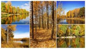 包括5种剧情的秋天拼贴画 库存照片