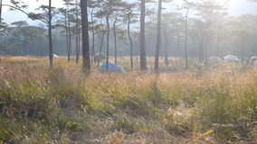 包缠与早晨阳光的打击在草甸和杉木 股票视频
