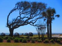 包缠盛开的树和躺椅, jekyll海岛乔治亚 免版税库存图片