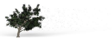 包缠结构树 图库摄影