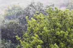 包缠结构树 免版税图库摄影