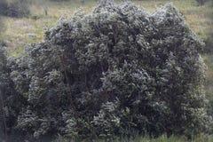 包缠结构树 库存照片