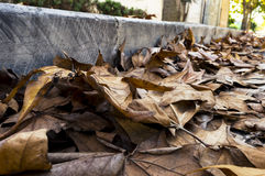 包缠黄色在橡木10月俄国附近的2008片航空秋天干燥秋天金黄树丛叶子叶子启用 库存图片