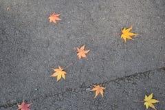 包缠黄色在橡木10月俄国附近的2008片航空秋天干燥秋天金黄树丛叶子叶子启用 免版税库存图片