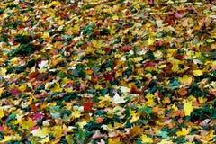 包缠黄色在橡木10月俄国附近的2008片航空秋天干燥秋天金黄树丛叶子叶子启用 库存照片