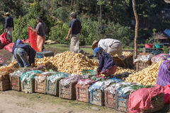 包装和移动土豆的工作者在农村危地马拉,中央 免版税库存照片