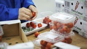 包装在塑胶容器的西红柿 影视素材