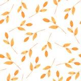 包装的无缝的样式秋天叶子,印刷品织品 水彩手拉的图象完善对案件设计,明信片, 向量例证
