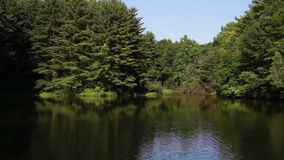 包围池塘的杉木 股票视频
