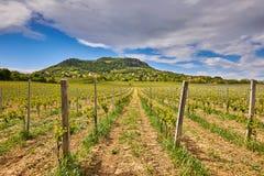 匈牙利葡萄栽培风景,山圣乔治 库存图片