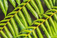 绿化叶子纹理 叶子纹理背景 图库摄影