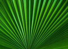 绿化叶子纹理 免版税图库摄影