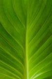 绿化叶子纹理 库存照片