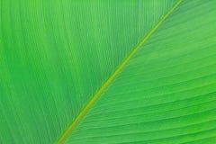 绿化叶子纹理 库存图片
