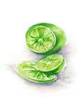 绿化在白色背景的被切的石灰手拉在水彩 免版税库存图片