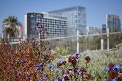 绿化城市 免版税库存图片
