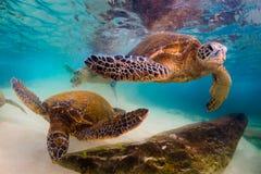 绿化夏威夷海龟 免版税库存图片