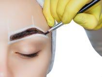 化妆师应用在一个女孩的眼眉的油漆眼眉染料 图库摄影