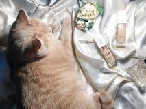 化妆用品和猫在美好的背景谎言 免版税图库摄影