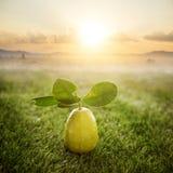 化学制品免费新鲜的有机柠檬 免版税库存照片