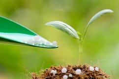 给化工(尿素)肥料在绿色后面的年幼植物 免版税库存照片