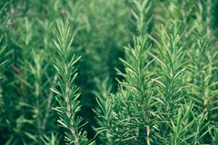 绿化有机 免版税库存照片