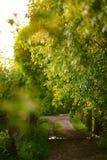 绿化林荫道在落日的光芒的一个村庄 免版税图库摄影