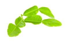绿化查出的叶子 免版税库存照片
