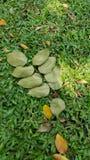 绿化树荫 图库摄影