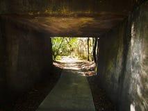 绿化森林的隧道 免版税库存照片