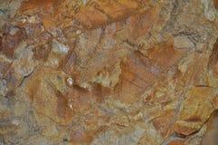 化石叶子 免版税库存图片