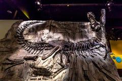 化石展览在皇家Tyrrell博物馆 免版税库存图片
