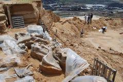 化石庞然大物 图库摄影