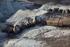 化石森林国家公园 免版税图库摄影